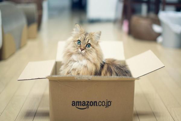 Un precioso gato dentro de una caja de amazon