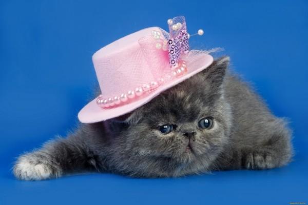Gatita gris con un sombrero rosa