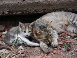 Postal: Una gata y su gatito