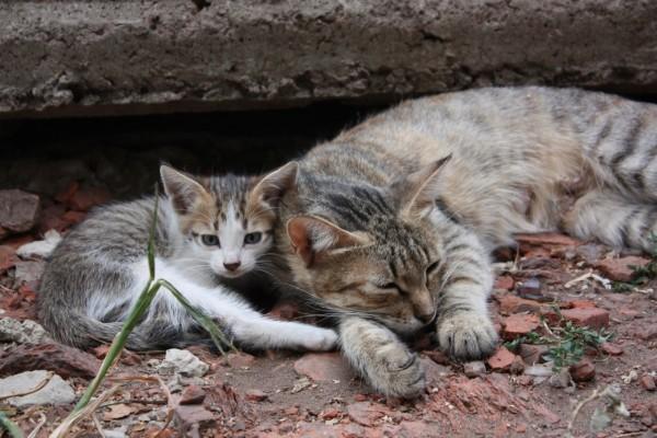 Una gata y su gatito