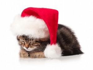 Gato dormido con un gorro de Santa Claus