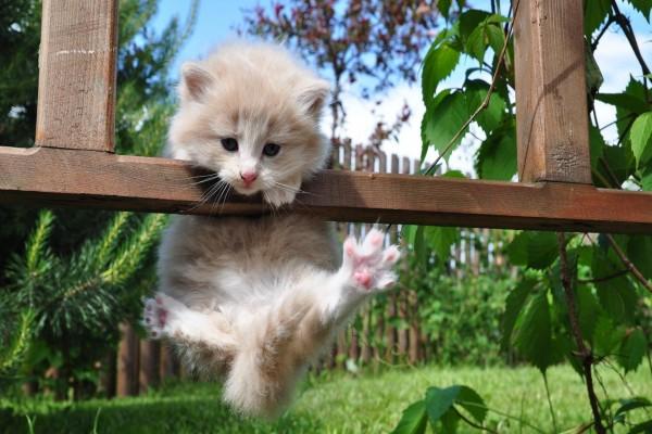 Gatito acrobático