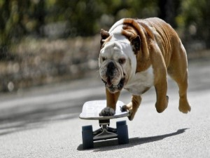 Postal: Perro en un monopatín