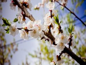 Postal: Rama de un árbol repleta de flores