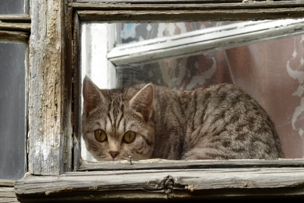 Un gato tras la ventana