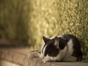 Gato dormido junto a una planta