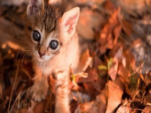 Postal: Gatito sobre hojas otoñales