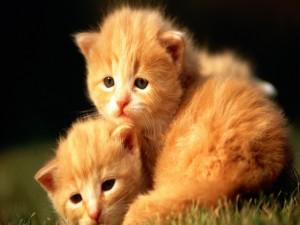 Postal: Dos gatitos acurrucados