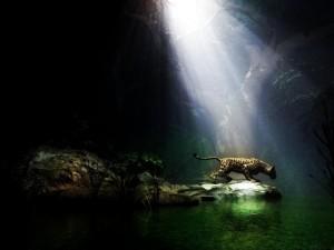 Postal: Jaguar bajo una cueva
