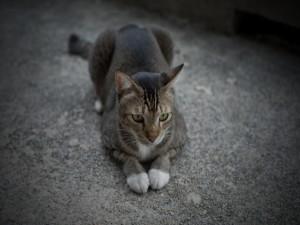 Postal: Un bonito gato tumbado