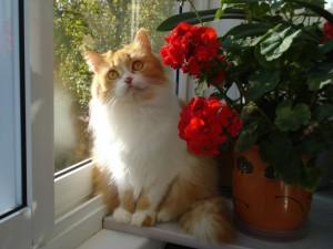 Un bello gato junto a una maceta