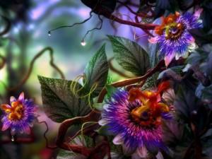 Maravillosas pasionarias en la planta