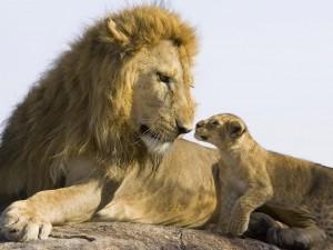 León observando a su cachorro