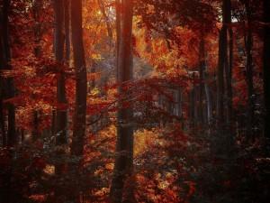 Postal: Sombras del otoño en el bosque