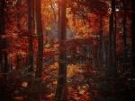 Sombras del otoño en el bosque