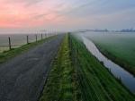 Cisnes nadando hacia el horizonte brumoso