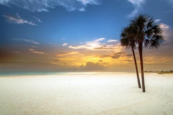 Dos palmeras en una playa de fina arena