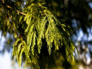 Postal: Ramas de un árbol