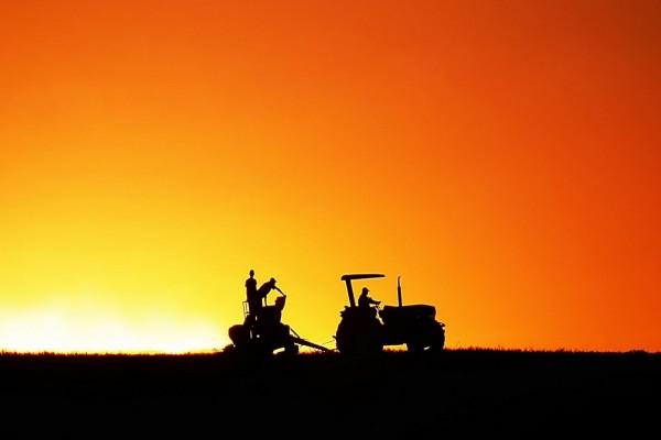 Trabajando en el campo al amanecer