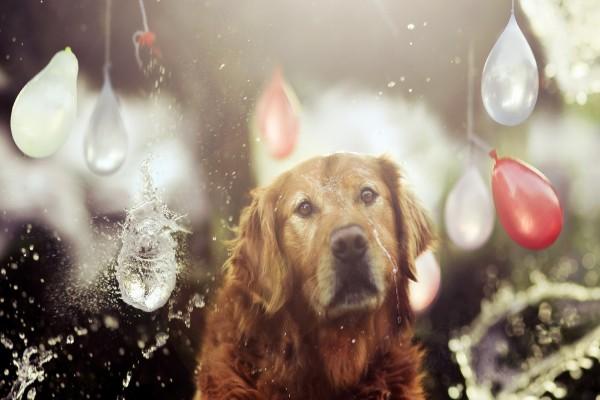 Perro entre globos de agua