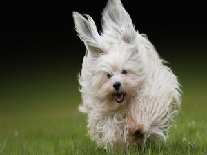 Un perro corriendo sobre la hierba