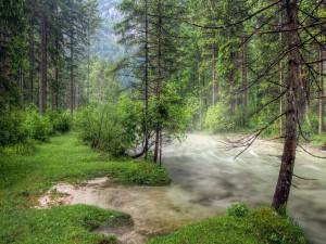 Río con un fuerte caudal