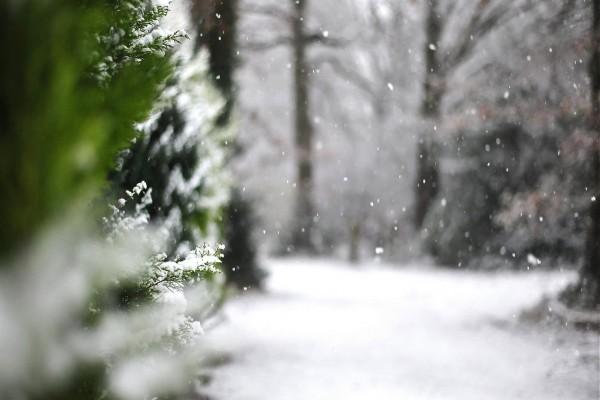Nevando en el bosque
