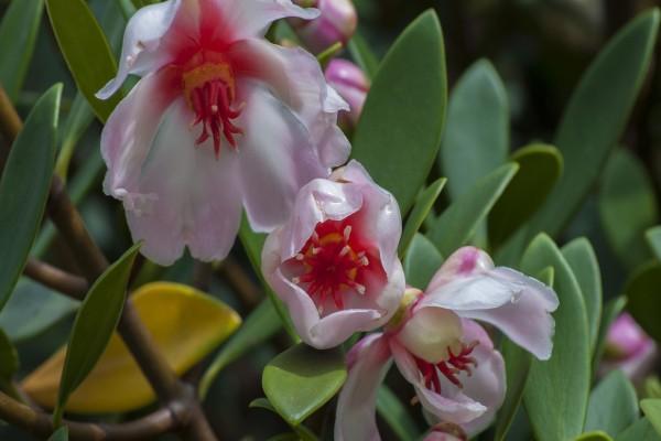 Preciosas flores en la planta