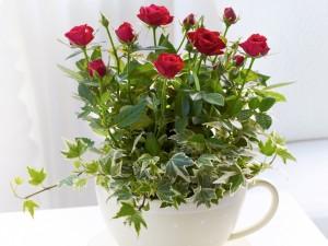 Bellísimo arreglo floral con rosas rojas
