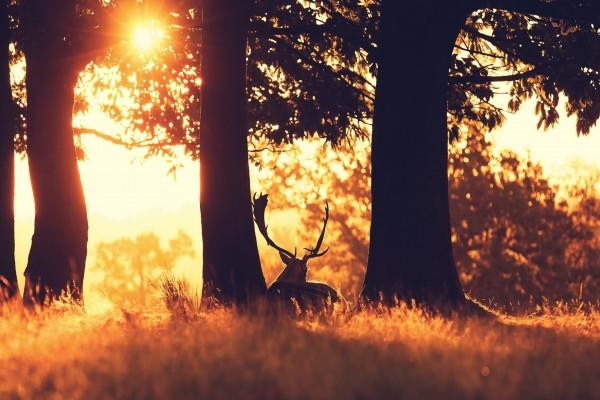 Ciervo tumbado entre los árboles