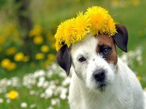 Un perro con flores amarillas sobre la cabeza