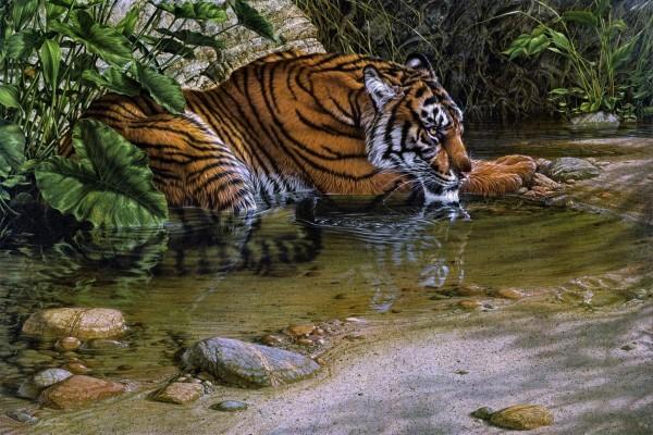 Tigre junto al agua