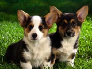 Dos perritos sobre la hierba