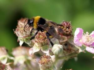Postal: Gran abeja sobre las flores