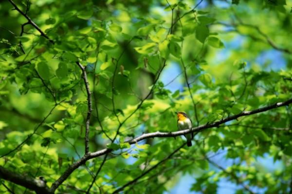 Pájaro sobre la rama de un gran árbol