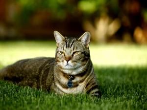 Postal: Gato relajado sobre la hierba