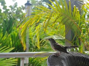 Pájaro sobre una silla de mimbre