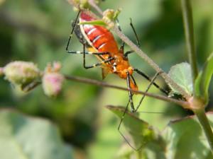 Un gran insecto en el tallo de una planta