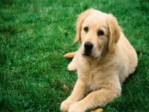 Postal: Un perro tumbado en la hierba