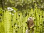 Una niña entre grandes plantas