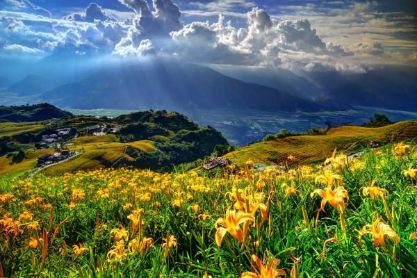 Hermoso paisaje cubierto de liliums amarillos