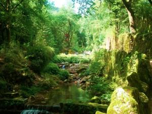 Un riachuelo entre verdes plantas y árboles