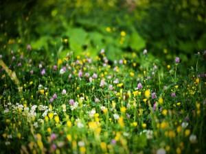Florecillas silvestres de varios colores