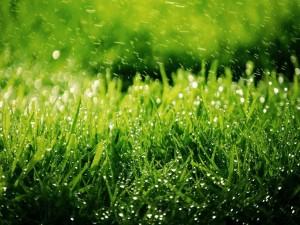 Postal: Agua sobre la hierba