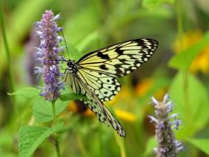 Mariposa sobre una flor lila