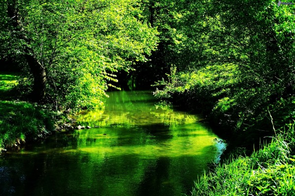 Río verde con el reflejo de los árboles