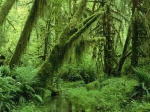 Riachuelo entre árboles