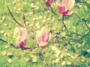 Hermosas flores sobre las ramas
