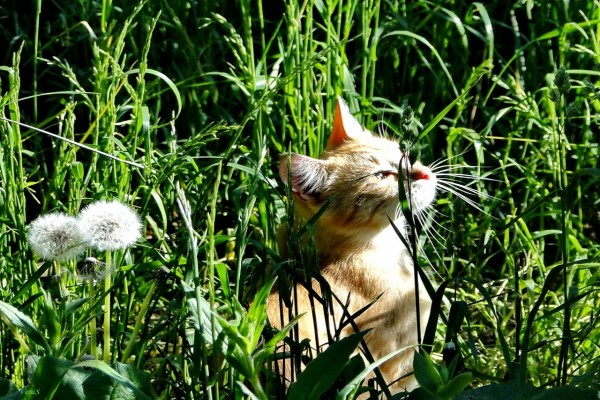 Gato calentándose al sol entre la hierba