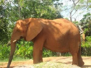 Gran elefante en un zoo